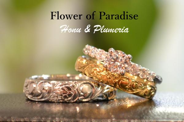 Fiower of Paradise.JPG